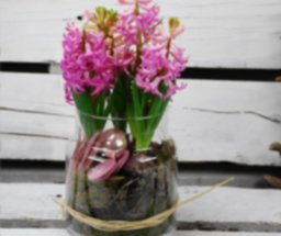 Composición de flores jacintos